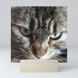 cat square o1 Mini Art Print