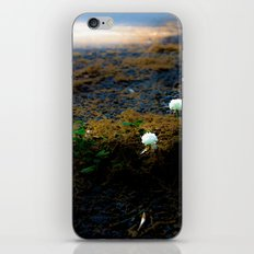 Sprouting an urban island iPhone & iPod Skin