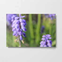Purple Bells are Ringing Metal Print