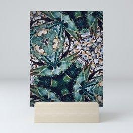 Succulents On Show No 3 Mini Art Print