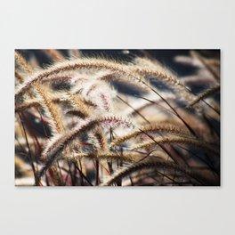 Soft Grass Canvas Print