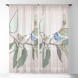 Splendid Fairy-wren Malurus splendens Beige Sheer Curtain