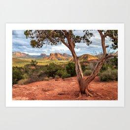 A Tree In Sedona Art Print