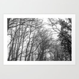 Black and white misty forest Art Print