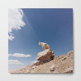 Rocky Mountain Goat Metal Print