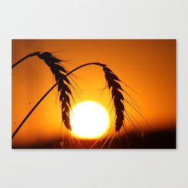 Wheat Sunset Silhouettes Canvas Print