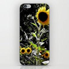 Sun Flowers iPhone & iPod Skin