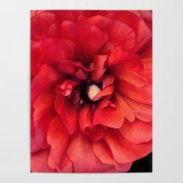 red spring flower Poster