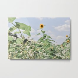 flowers abundant Metal Print