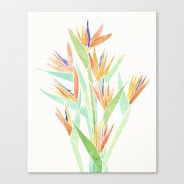 Birds of Paradise ~ tropical bouquet Canvas Print