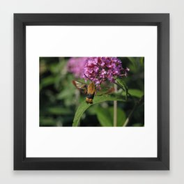 GMO BUG a cross between a moth a hummingbird and a bee #2 Framed Art Print