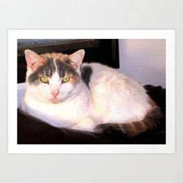 Sweet Daisy Cat Art Print