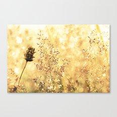Blazing Meadow Canvas Print