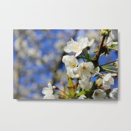 Blossoms in the Sun Metal Print