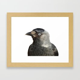 Jackdaw (Corvus monedula) Bird Portrait Vector Framed Art Print