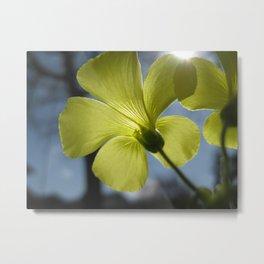 Floral Radiance Metal Print