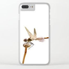 Dragonfly Resting On Seed Head Isolated Clear iPhone Case