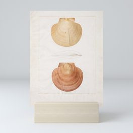 François Jean-Baptiste Ménard de la Groye (Le Mans 1775 - 1827 Saint-Samson) Sea Shells, c.1807-26 3 Mini Art Print