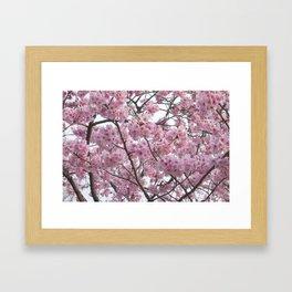Cherry Blossom Trees. Pink flowers Framed Art Print
