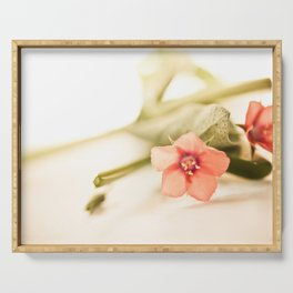 Beautiful origanum flower - Floral Photography #Society6 Serving Tray