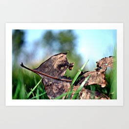 spring sprang early Art Print