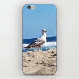 Seagull on the beach iPhone Skin