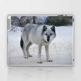 Lone wolf of the Canadian Rocky Mountains Laptop & iPad Skin
