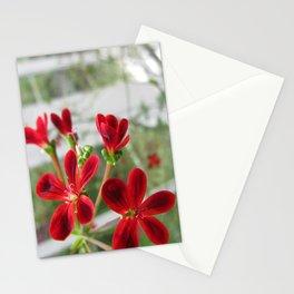 Red Pelargonium Stationery Cards