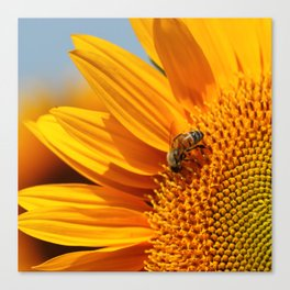 Sunflower & Bee Canvas Print
