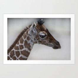 Baby Giraffe with Big Eyes Art Print