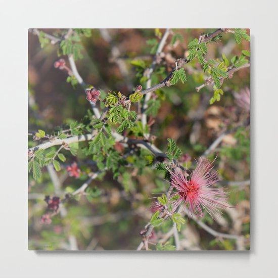 Desert Wildflower Bush Metal Print