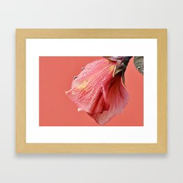 Raindrop on Hydrangea Framed Art Print