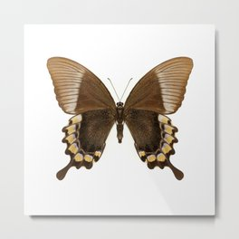 Brown and Gold Swallowtail Butterfly Metal Print