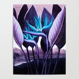 Birds of Paradise Temple of Flora Purple Turquoise Poster