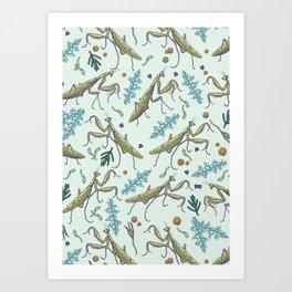 praying mantis in the garden Art Print