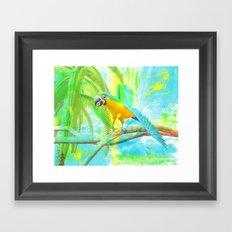 Macaw Framed Art Print