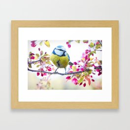 Romantic Flower Blossom with blue tit spring bird Framed Art Print