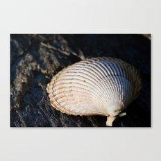 Sun Shell Canvas Print