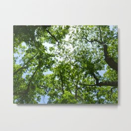 Reunion Treescape Metal Print