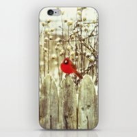 cardinal iPhone & iPod Skins featuring cardinal by Bonnie Jakobsen-Martin