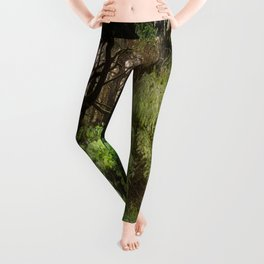The Light Within - Beauty in the Washington Rain Forest Leggings