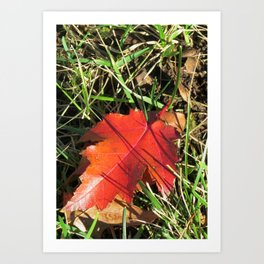A Unique Red Leaf Art Print