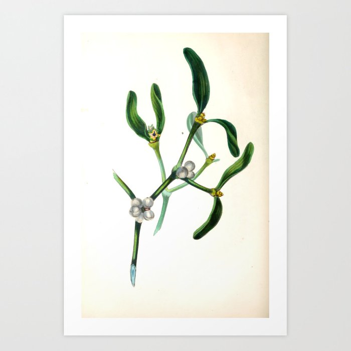 """The Mistletoe, from """"The Spirit of the Woods,"""" 1849 (benefiting the Arbor Day Foundation) Art Print"""