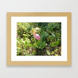 Stemless Ladyslipper Framed Art Print