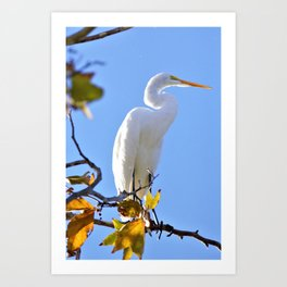 Great White Egret in Tree by Reay of Light Art Print
