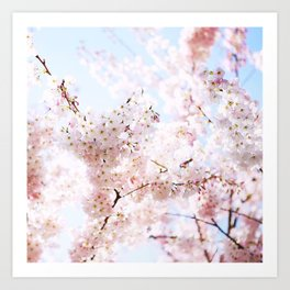 Soft Pink and White #pinkflower Art Print