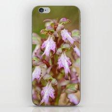 Wild Orchid Barlia Robertiana 408 iPhone & iPod Skin