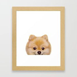 Pomeranian Dog illustration original painting print Framed Art Print