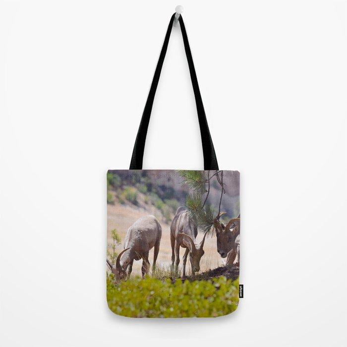 Desert Bighorn Sheep - Zion Tote Bag