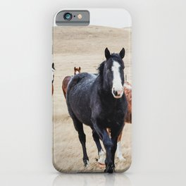 Wild Horses In the Field iPhone Case